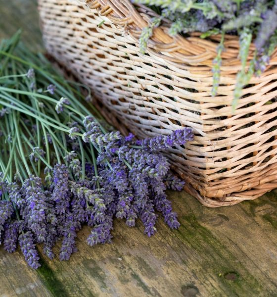 Flora 101: 5 Plants You Should Try Growing At Home
