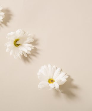 Fresh gentle chamomiles arranged on beige table
